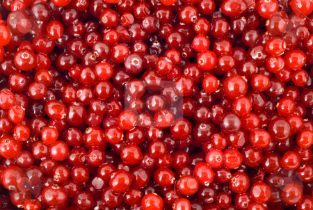 Cranberry berry stock photo, Cranberry berry nature background by Vladyslav Danilin