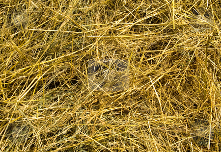Straw  stock photo, A close-up background of straw. by Vladyslav Danilin