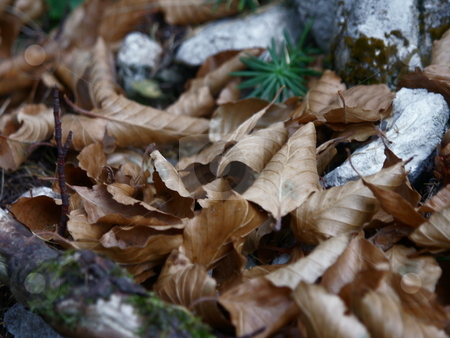 Autumn  stock photo, Herbstlaub in Buchenwald / Autumn in wood by Thomas K?