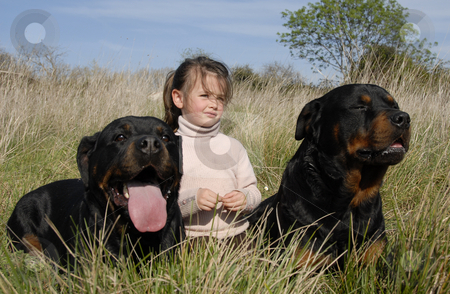 Dangerous dogs and child stock photo, little girl and two dangerous purebred rottweiler by Bonzami Emmanuelle