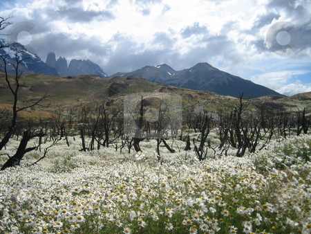 National Park Chile stock photo, Going for a hike in Chiles breath taking national parks by Giovanna Tucker