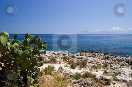 Mediterranean sea and Opuntia stock photo, A cactus (opuntia ficus indica) with Mediterranean Sea in background; Riserva dello Zingaro, Sicily, Italy by Roberto Marinello
