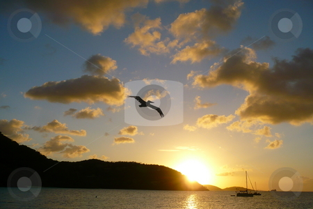 Cinnamon Bay Sunset stock photo, This pelican just happen to fly through as we were taking photo's of the sunset at Cinnamon Bay in the U.S. Virgin Islands National Park. by Robert Liebold