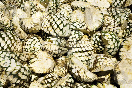 Agave Fruit Piled Up and Waiting for Oven stock photo, Agave Fruit Piled Up and Waiting for Oven at Tequila Factory, Guadalajara, Mexico by William Perry