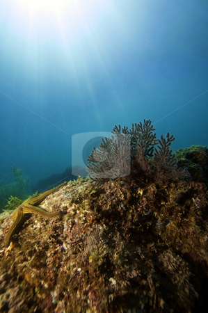 Sunrays on Reef stock photo,  by Greg Amptman