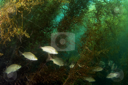 Hiding in the Bushes stock photo, Sea of Cortez by Greg Amptman