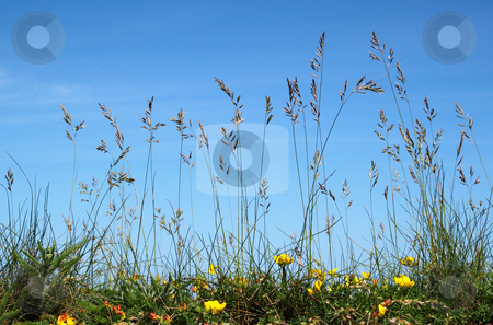 Ground view of natural long wild grass. stock photo, Ground view of natural long wild grass. by Stephen Rees