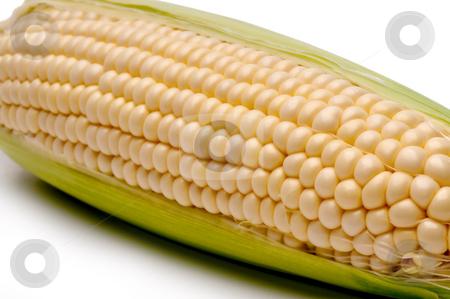 Horizontal close up of a cob of corn stock photo, Horizontal close up of a cob of corn by Vince Clements