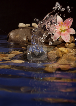 Harmony stock photo, Composition for a relaxation from sea stones and a lily. by Sergey Goruppa