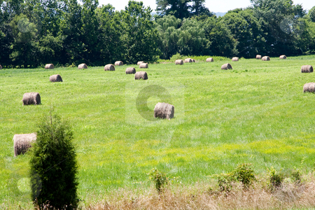 Meadow with bales of hay stock photo, A landscape of farmland, meadow field of grass surrounded by trees and covered with bales of hay by Paul Hakimata
