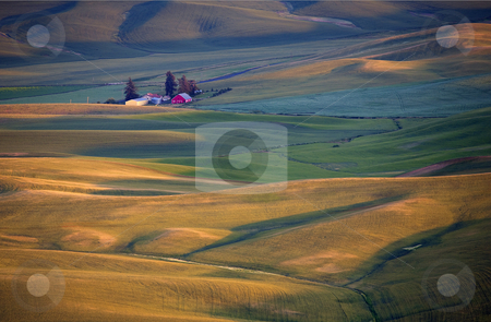 Golden Palouse stock photo, Golden light bathes the wheatfields of the Palouse in Eastern Washington by Mike Dawson