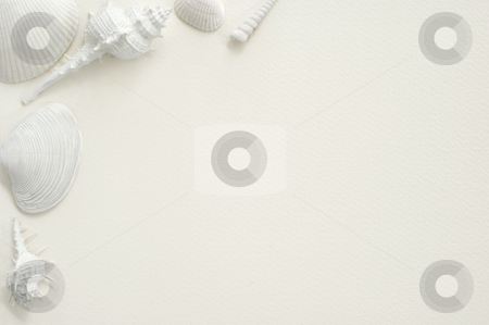 White Seashell Background stock photo, White seashells presented on a white sheet of watercolor textured paper offering a framing format by Stefan Breton