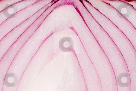 Detail of purple onion, vegetables stock photo, Detail of purple onion, delicious food by Lawren