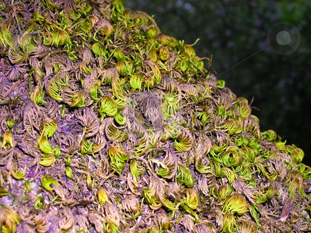 Moss stock photo, Tree trunk moss by Jaime Pharr