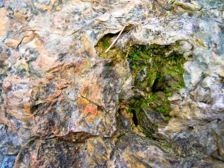 Bark and moss stock photo, Moss in petrified tree by Jaime Pharr