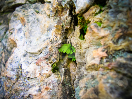 Leaf and bark stock photo, Leaf growing out of petriefied tree by Jaime Pharr