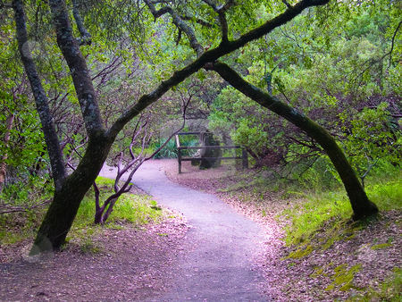 Crossing trees stock photo, Trees crossing over a path by Jaime Pharr
