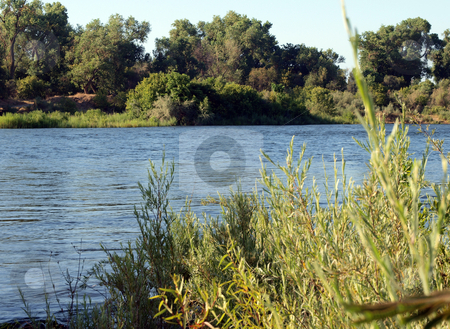 View across the river on summer morning stock photo, View of river from one bank to the other by Jeff Cleveland