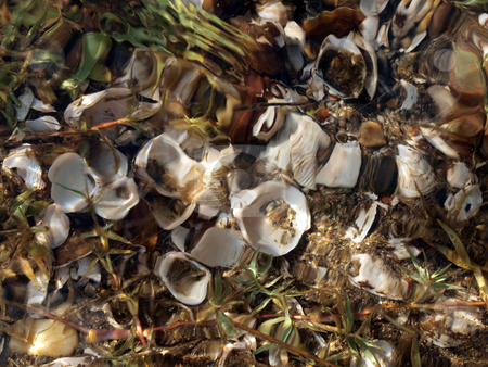 Open oyster shells below rippling water of river stock photo, Shells below shallow rippling water of river by Jeff Cleveland