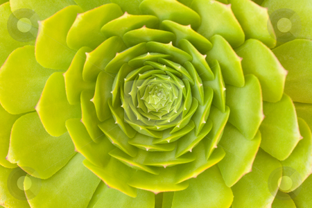 Beautiful Succulent Abstract stock photo, Beautiful Green Succulent Cactus Blossom Abstract Image. by Andy Dean