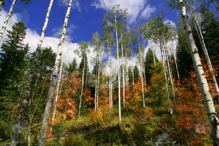 Rocky Mountain Fall stock photo, Fall colors in the Rocky Mountainswith blue skys and clouds by Mark Smith