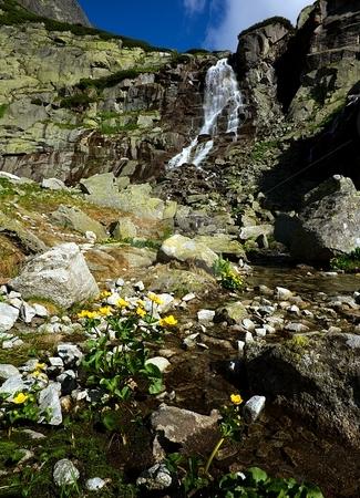 Waterfall and yellow flowers stock photo, Mountain landscape with a waterfall and yellow flowers by Juraj Kovacik