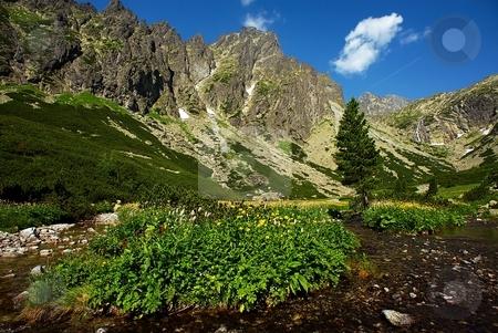 Mountain creek scenery stock photo, Mountain creek scenery with peaks and flowers by Juraj Kovacik