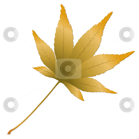 Japanese Maple leave stock vector clipart, Japanese Maple leave, vector illustration by Laurent Renault