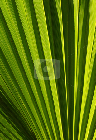 Striped green leaf natural abstract background. stock photo, Striped green leaf natural abstract background. by Stephen Rees