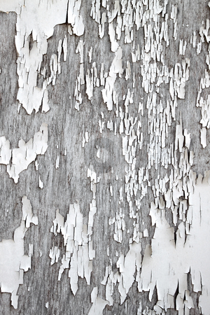 Old flaky white paint peeling off a wooden fence. stock photo, Old flaky white paint peeling off a wooden fence. by Stephen Rees