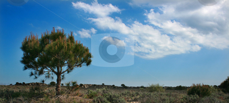 Tree stock photo, Tree alone on an island meadow by Marc Torrell