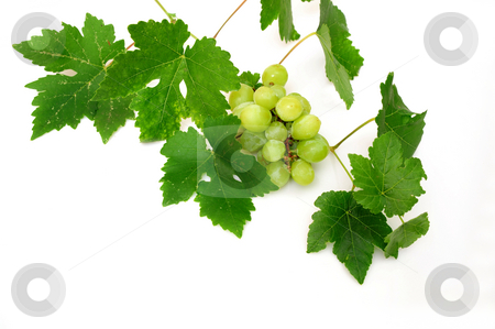 Seedless Grapes stock photo, Bunch of seedless grapes and grapevine on a white background by Lynn Bendickson