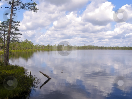 Lake scenery stock photo, A bog lake in the marsh called Meenikunno, in the South East of Estonia, with forest in the background and clouds reflecting in the water by Alessandro Rizzolli