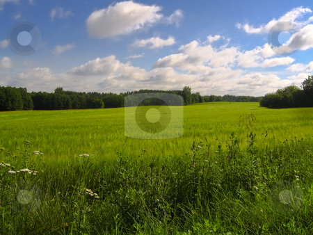 Green field with blue sky stock photo, Green field with blue sky in the Estonian countryside by Alessandro Rizzolli