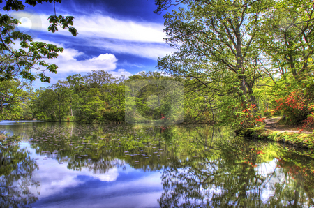 Relection of nature stock photo, Trees and sky reflecting on a lake by Paul Malandain