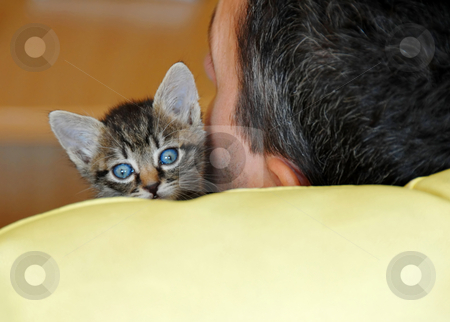 Baby cat portrait stock photo, Little baby cat sleeping on human shoulder by Julija Sapic