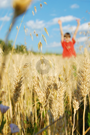 Summer field stock photo, Happy boy in yellow wheat field at scenic rural background by Julija Sapic