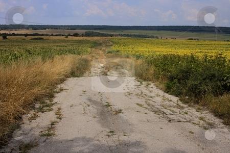 Country road stock photo, Oad in farmland with cloudy sky by Minka Ruskova-Stefanova