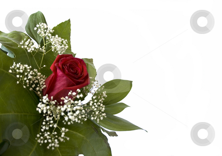Rose stock photo, Bouquet with one rose and  little white flowers by Minka Ruskova-Stefanova