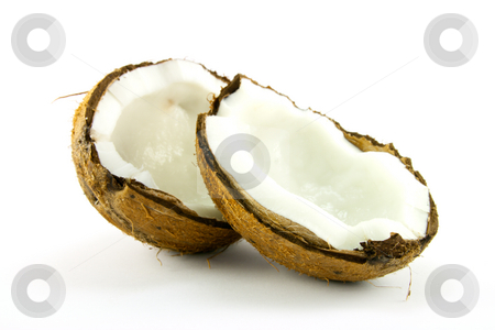 Coconut stock photo, Single brown hairy cocounut halved on a white background by Keith Wilson
