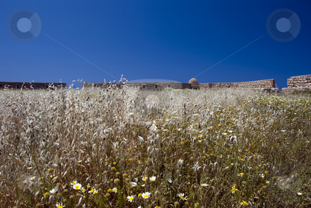 Corn grain field stock photo, Grain corn field on the greece island crete by Chris Willemsen