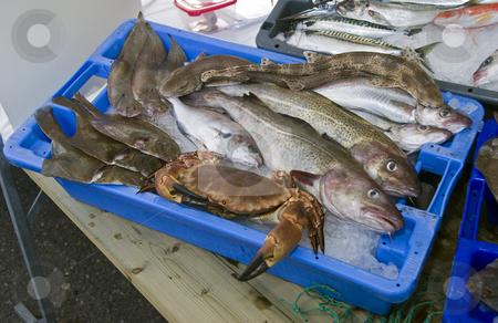 Fresh fish stock photo, Fresh fish on the dutch fishmarket in volendam by Chris Willemsen