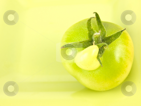 Tomato with unusual growth stock photo, Tomato with an unusual growth on the top of it by John Teeter