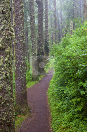 Foggy Trail stock photo, A foggy path among the towering fir trees on the Cape Lookout Trail in Oregon by Mike Dawson