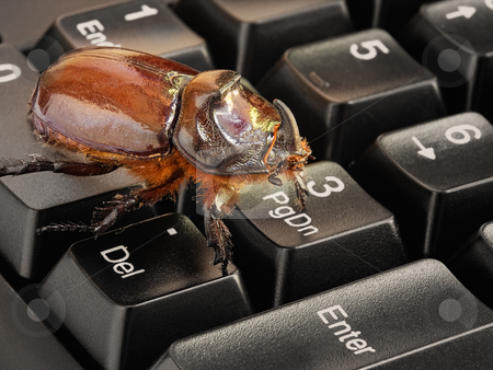 Computer bug stock photo, Metaphor about problems in the world of computers, software, and Internet. by Sinisa Botas