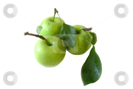 Three apples stock photo, Three apples on white background by Minka Ruskova-Stefanova