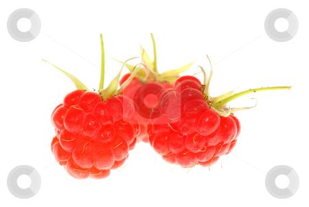 Raspberry stock photo, Three ripe raspberry on white background by Jolanta Dabrowska