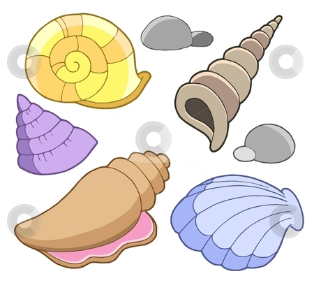 Sea shells collection stock vector clipart, Sea shells collection - vector illustration. by Klara Viskova