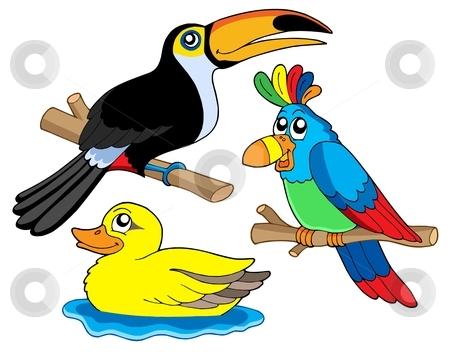Various birds collection 01 stock vector clipart, Various birds collection 01 - vector illustration. by Klara Viskova