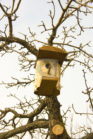 Birdhouse on tree stock photo, Birdhouse on tree by Minka Ruskova-Stefanova